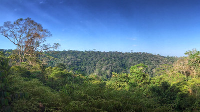 A view over the rainforest canopy, by participant Valerie Gebert.