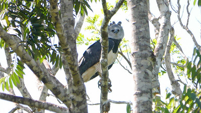 Harpy Eagle is one of the highlights we'll hope for. Photo by participant Valerie Gebert.