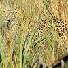 Always keep a sharp eye out in Leopard country! by participant Barbara Williams