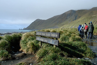 Boiler Bay on Macquarie Island, by guide Chris Benesh