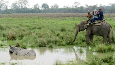 Viewing a massive Indian Rhino at Kaziranga. Photo by guide Phil Gregory.