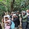 Enjoying the wonderful Araripe Manakin by guide Bret Whitney