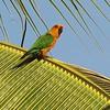 Jandaya Parakeet by participant Becky Bradley