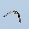 Short-eared Owl by participant Barry Tillman