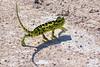 Chameleon by participant Paul Thomas