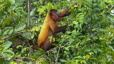 Suriname's a great place for mammal-watching, too! Photo by participant Randy Siebert.