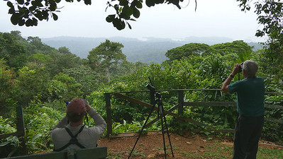 Birding the Brownsberg overlook. Photo by participant Randy Siebert.