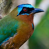 The endemic Trinidad Motmot, by participant Tony Quezon