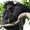 Chimpanzee by participant Rachel Hopper
