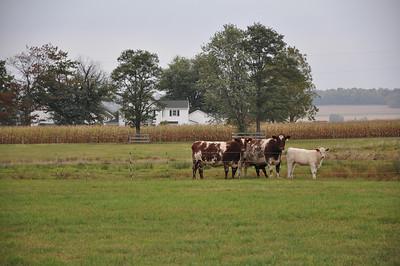 Geib Farms - Acres for Auction 2014