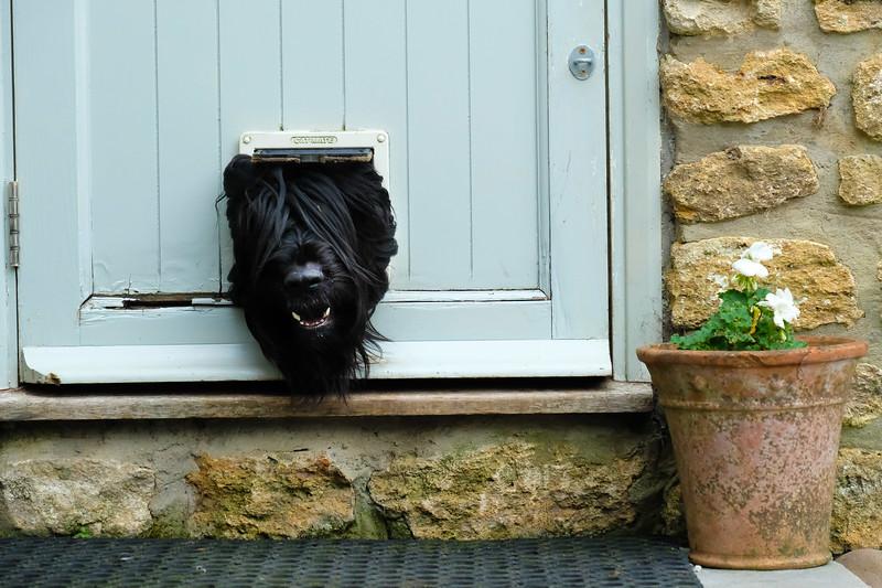 black dog at wedding