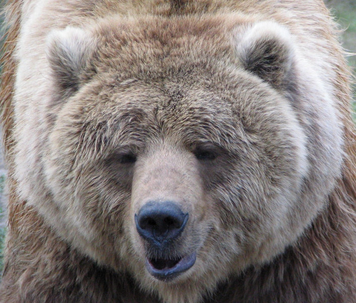 These Brown Bears are retirees from Disney films of the 1970s.