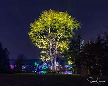 Arb Illumination-4