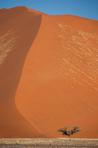 Sossusvlei: Dunes with tree