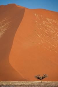 Sossusvlei: Dunes with tree