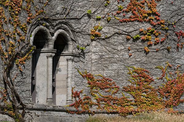 Vines cling to the stone facade of Penrhyn Castle