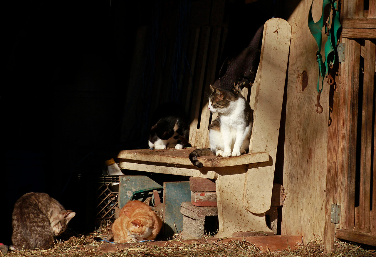Funny Farm Animal Sanctuary