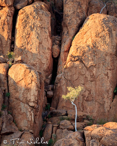 Mowani boulders