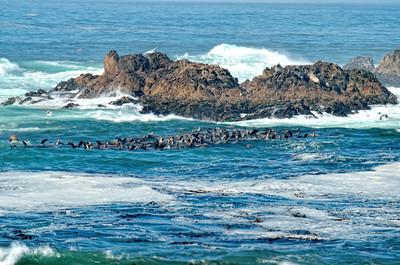 Sea Lions Mile Drive
