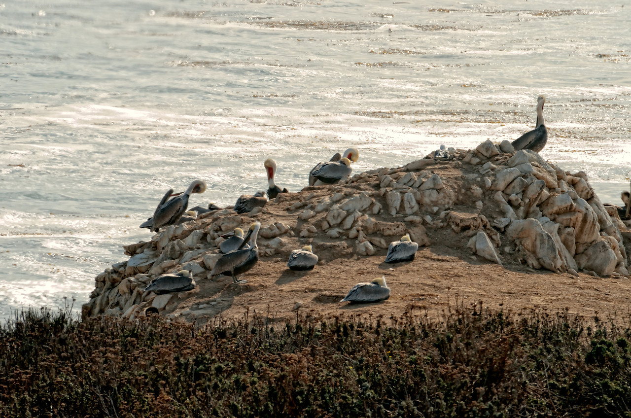 Birds Point Lobos State Reserve