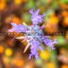 wildflower_1724