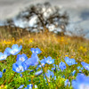 santa margarita wildflowers 5563
