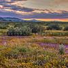 carrizo plain sunset 2411-
