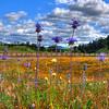 wildflowers_1728