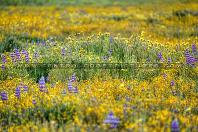 wildflowers 0947