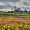 wildflowers 0853-