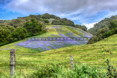 wildflowers 0567--2