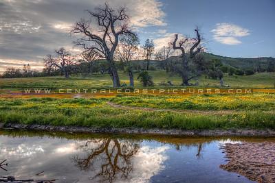 Wildflowers Creek_0876