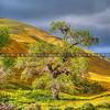 superbloom tree_1848