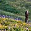 fence bird_1064