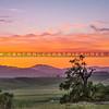 sunset oak trees-1207