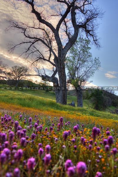 wildflowers 0886-