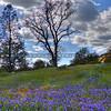 wildflowers_1737