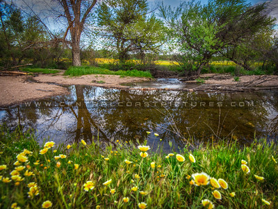 shell creek wildflowers 0858-