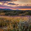 carrizo plain sunset 2388