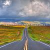 highway 58 superbloom_1799