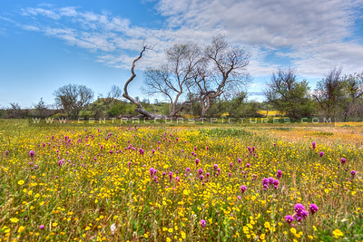 wildflowers 0838-
