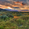 carrizo plain wildflowers sunset 2358-