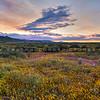 carrizo plain sunset 2404-