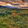 carrizo plain wildflowers sunset 2356-