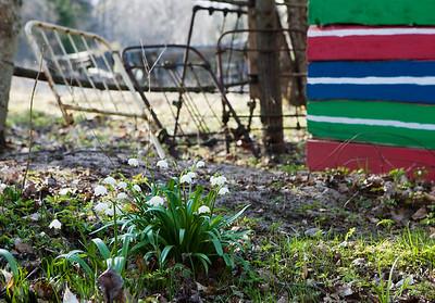 Kevad/ Spring