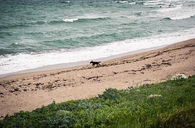 koer rannal