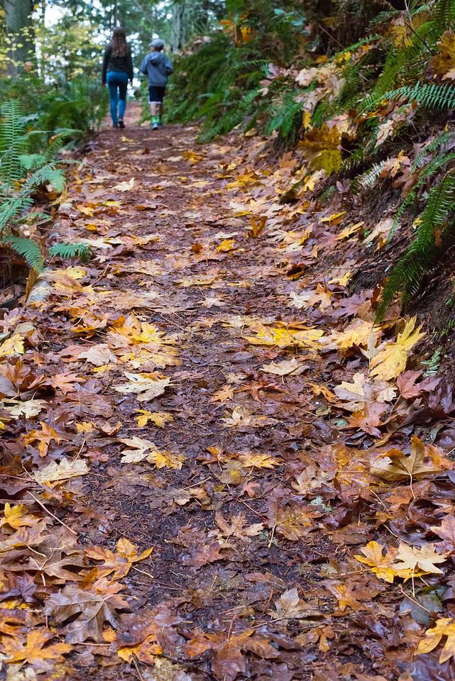 walking in the woods, weowna.