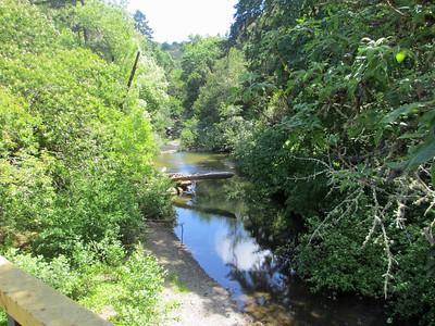 Samuel P  Taylor State Park 002