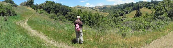 Trail DT