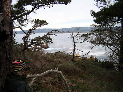 Point Lobos 12:31:0306